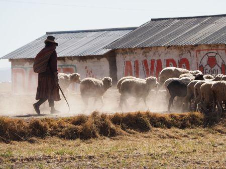 Chaque jour nous croisons les troupeaux de moutons menés à la pâture