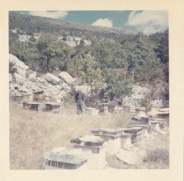 Fernand James et ses ruches été 1966