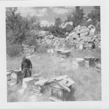 F.James apiculteur été 1966