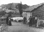 L'élevage au fil du XXème siècle