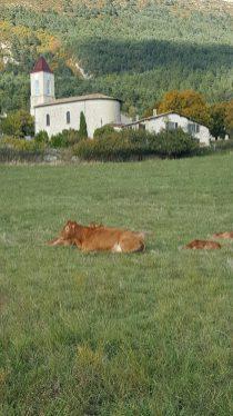 La vache et l'église