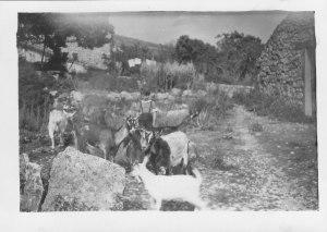 Les-chèvres vers 1946