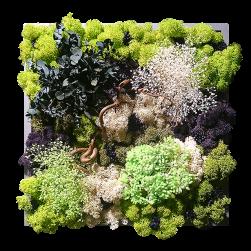 vegetal_5