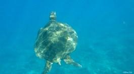 Turtle Life