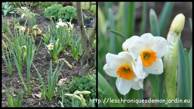 Narcisse g ranium les chroniques de mon jardin - Beau jardin rose and geranium ...