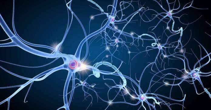 neurone