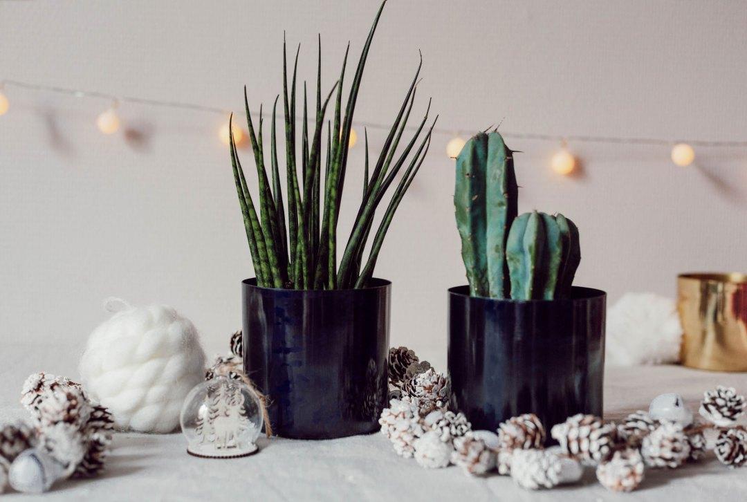Idées cadeaux cactus - Les Deux Chouettes