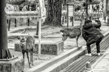 A Nara, selfie avec les daims