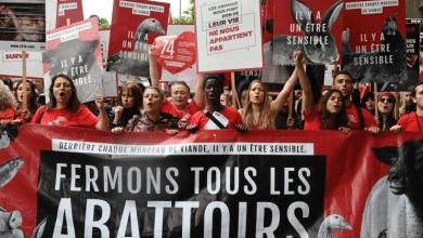 Photo de «Fermons les abattoirs!»: Défilé à Paris contre la maltraitance animale