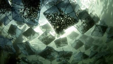 Photo de Métiers d'aquaculture: 2,5 millions de dollars pour l'appui au développement