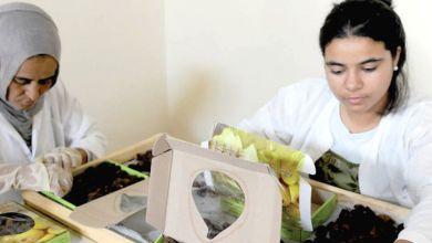 Photo de Les coopératives agricoles fleurissent dans l'Oriental