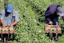 Photo de Agrégation agricole : les seuils de financement fixés