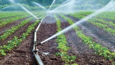 Photo de Souss: les agrumiculteurs manquent d'eau