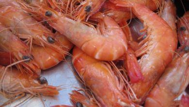 Photo de Belgique : le confinement au Maroc a eu un impact…sur les crevettes