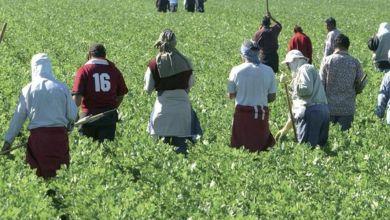 Photo de Agriculture : la filière espagnole craint sa rivale marocaine