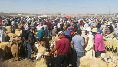 Photo de Aid Al Adha: l'Intérieur sanctionne des souks aux moutons