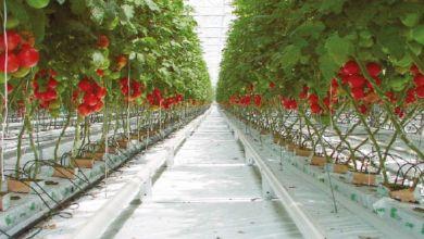 Photo de Le PLF 2021 ravive le débat sur la fiscalité agricole