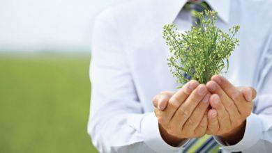 Photo de Entrepreneuriat : le concours Green Startup lancé