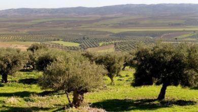 Photo de Oléiculture : Fès-Meknès entame sa conversion au bio