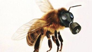 Photo de Interdiction des néonicotinoïdes : la justice de l'UE rejette un pourvoi de Bayer
