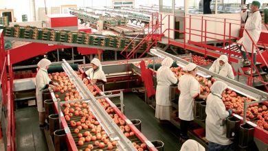 Photo de Export de fruits et légumes. Retour… au  papier pour le certificat phytosanitaire