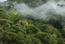 Photo de Climat : l'UE va planter 3 milliards d'arbres d'ici 2030