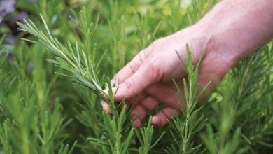 Photo de Protection de l'espace végétal : le nouveau dispositif légal en marche