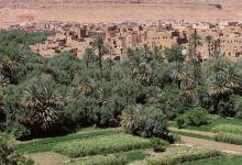 Photo de Oasis et arganeraie : l'ANDZOA se penche sur la stratégie 2022-2030