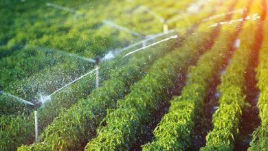 Photo de Fès-Meknès : la région fait son chemin dans l'agriculture bio