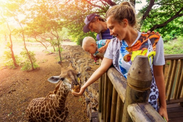 feeding-giraffes-at-casela-safari-park