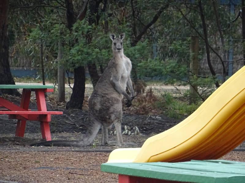 koalas0003