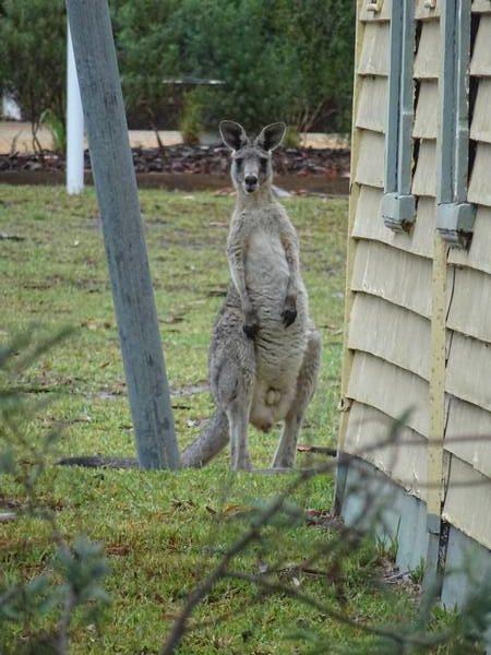 koalas0007