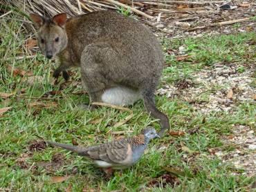 faune australienne