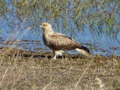 outback queensland00228213297444609753165..jpg