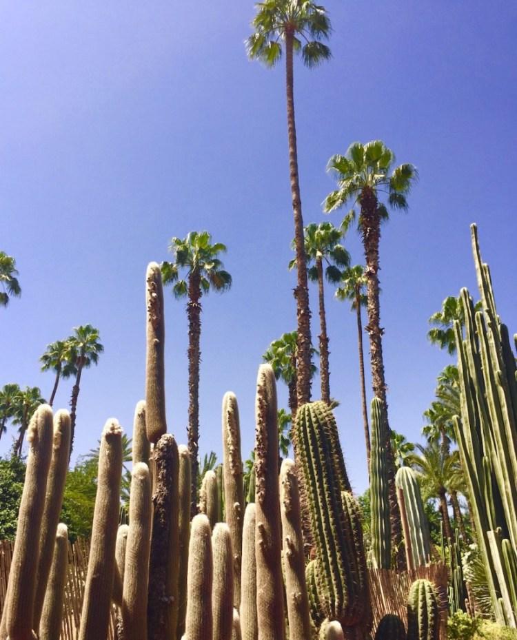 marrakech-jardins-majorelle-cactus-exploratrices