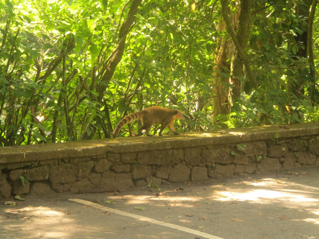 tijuca-rio-animal