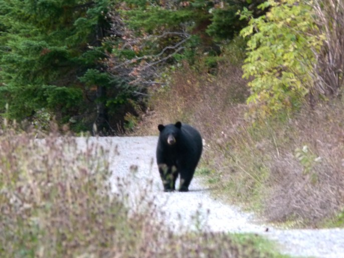 les-exploratrices-gaspesie-ours-parc-forillon