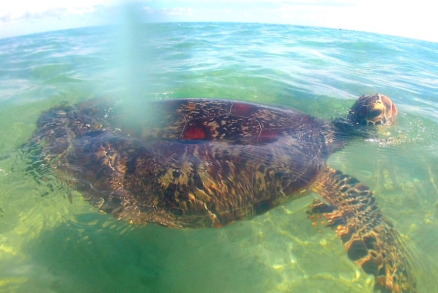 quoi-faire-a-mayotte-tortue