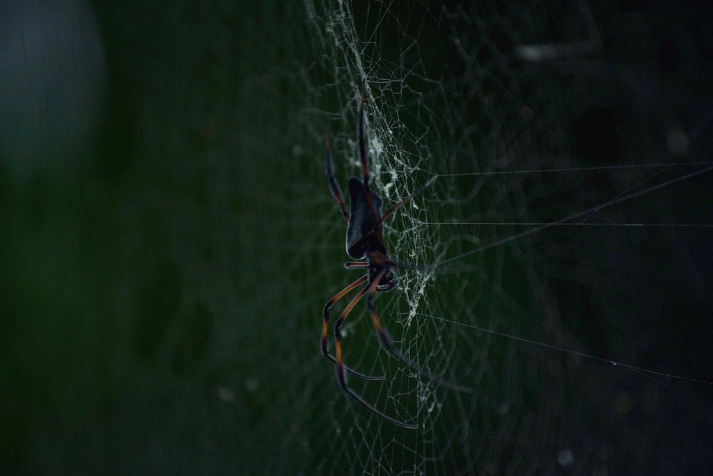 les-seychelles-danger-araignee