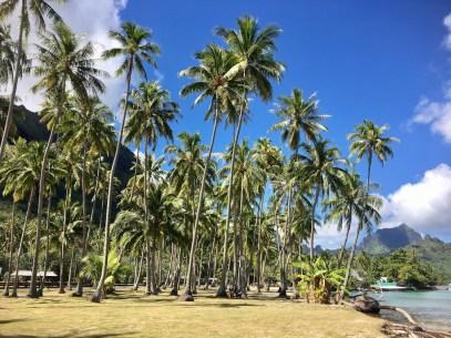 moorea-palmiers-plage