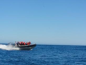 afrique-sud-cap-de-bonne-esperance-speedboat