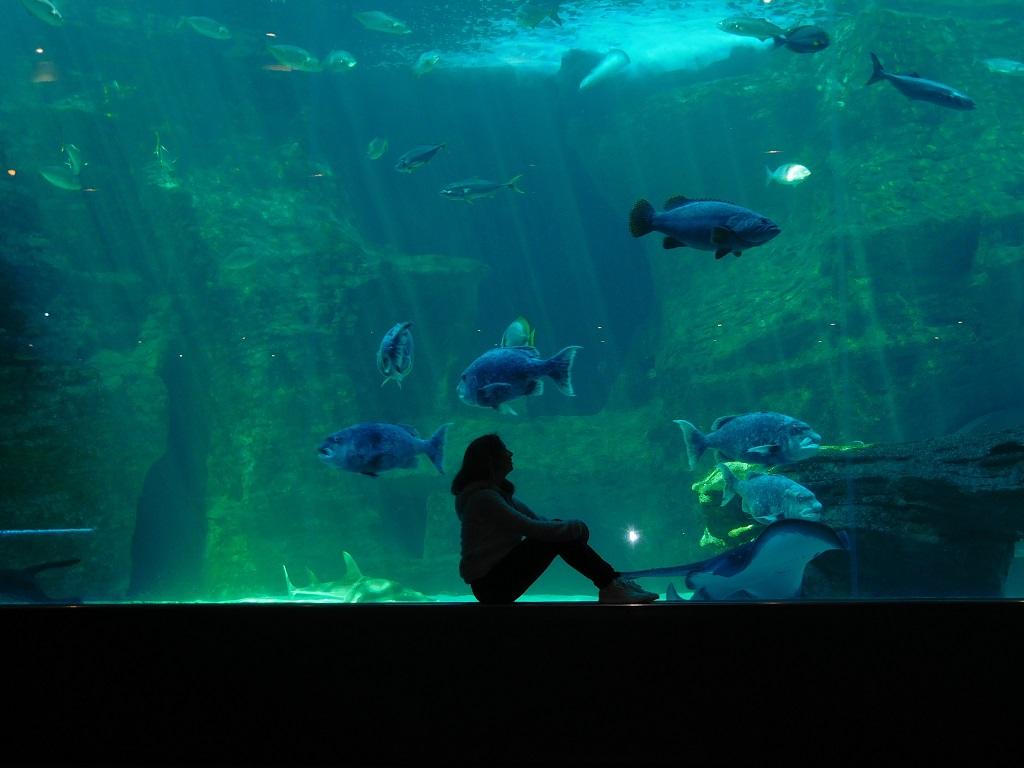 aquarium-modif