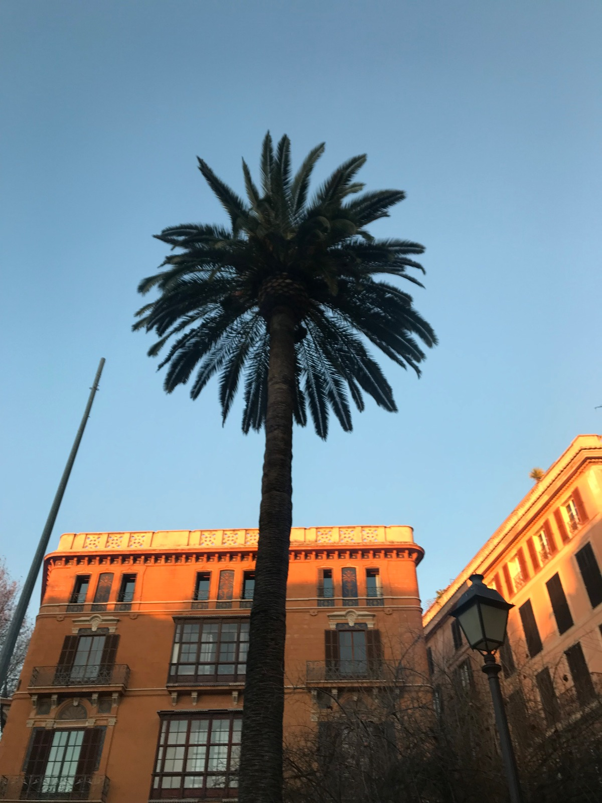 palma-mallorca-bonnes-adresses-facade-palmier-sunset