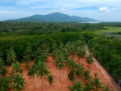 indonesie-karimunjawa-terre-rouge-palmiers