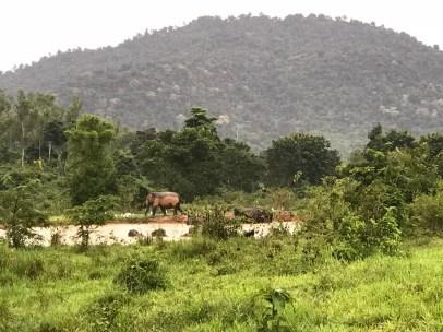 Kuiburi-elephant-safari