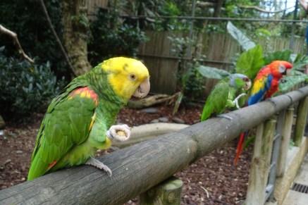 que-faire-dans-le-bearn-zoo-asson-perroquet