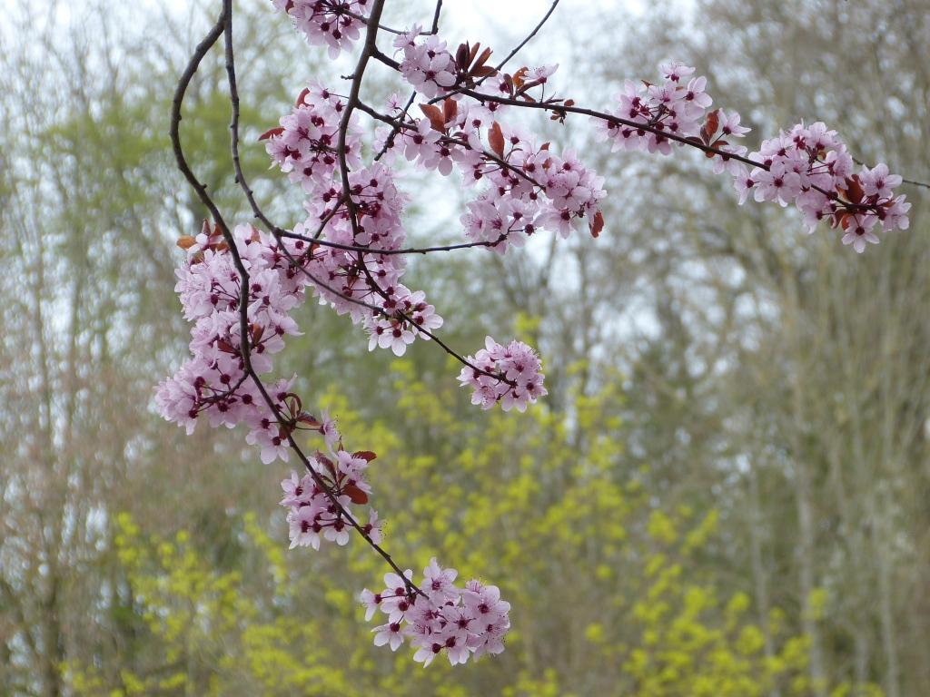 Sommerschnitt der Blütensträucher – Tipps für die Gartenpflege