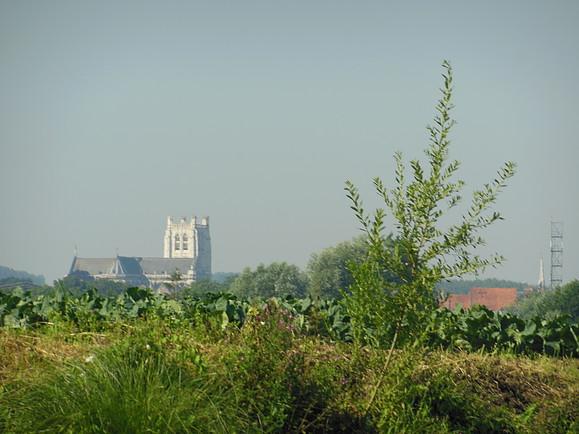 La cathédrale de Saint-Omer, vue des marais