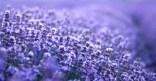 Les Fées Bottées Phytothérapie Cosmétiques Biologiques Alimentation Vivante