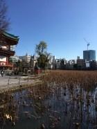 Ueno et ses nénuphars